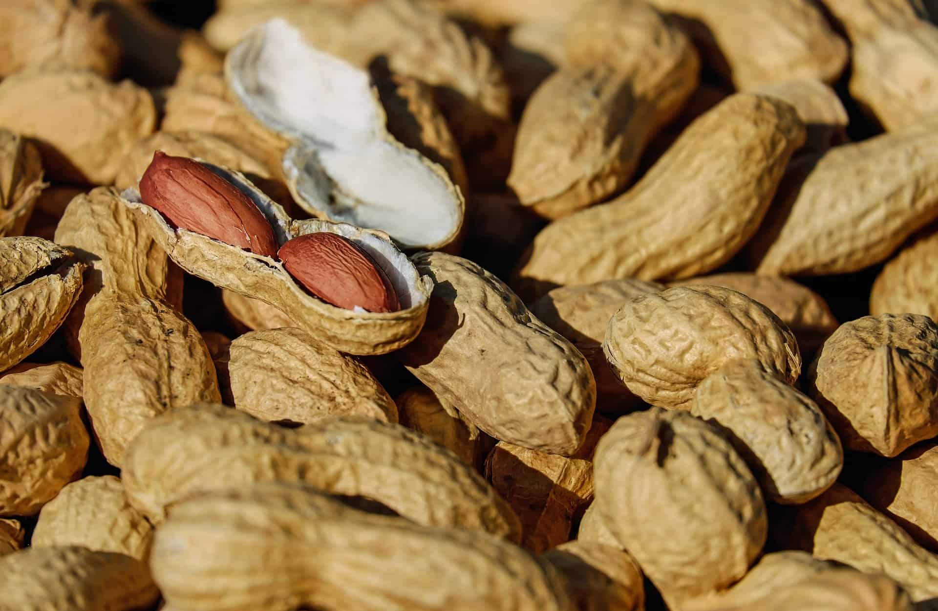 Erdnussöl: Test & Empfehlungen (04/21)