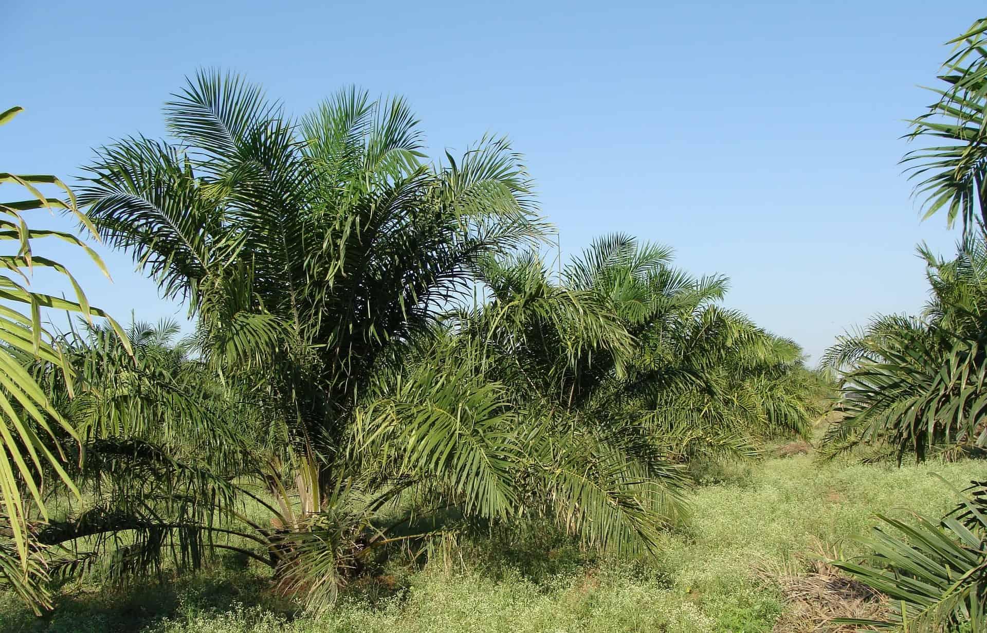 Palmöl: Test & Empfehlungen (06/20)