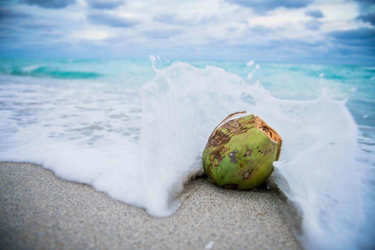 Grüne Kokosnuss in der Brandung