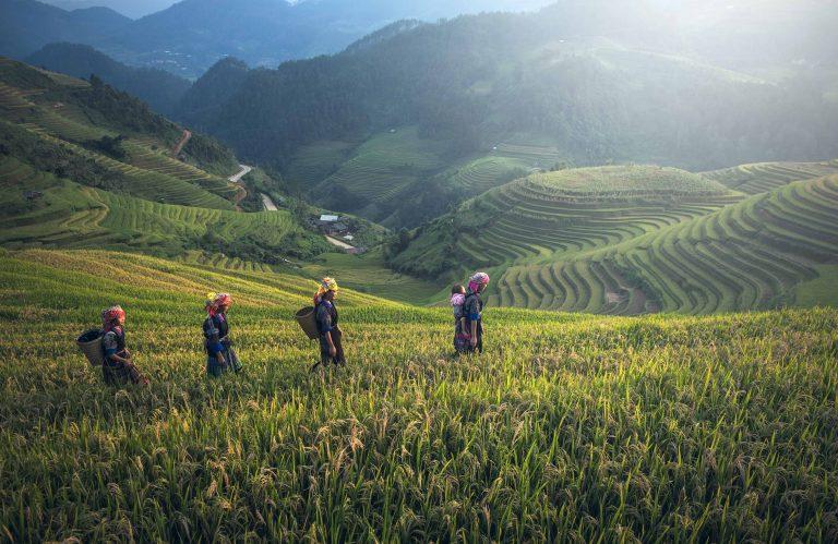 Reisfelder mit einheimischen Frauen in traditioneller Kleidung