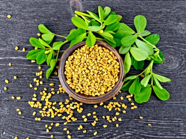 Fenugreek seeds in a bowl with green leaves on a wooden plank background on top