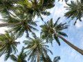 Palmzucker: Test & Empfehlungen (07/20)