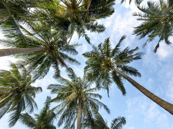 Palmzucker: Test & Empfehlungen (01/20)