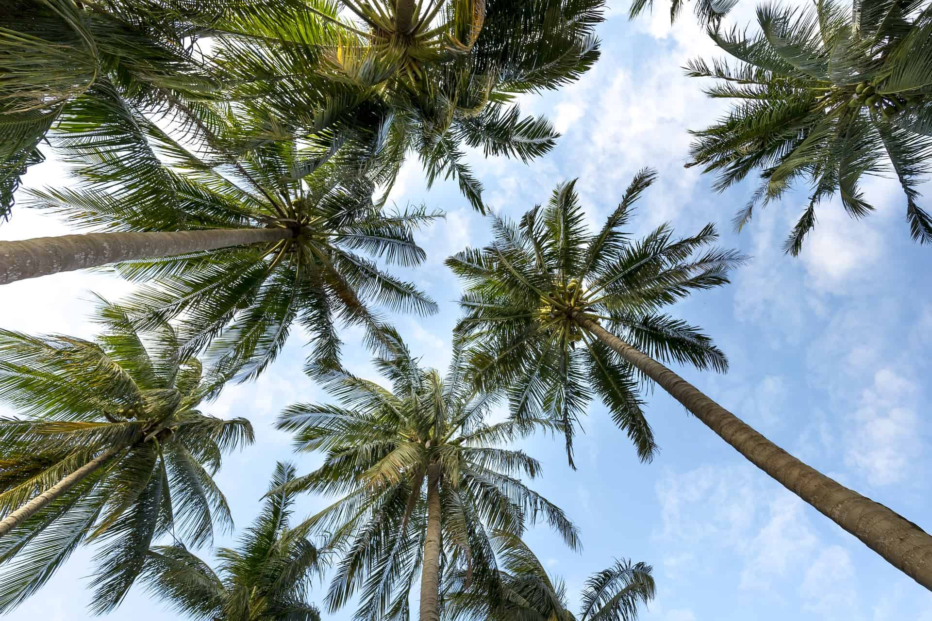 Palmzucker: Test & Empfehlungen (10/20)