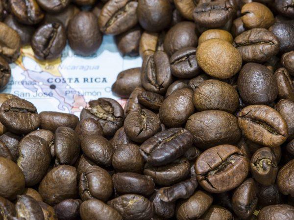 Kaffee aus Costa Rica: Test & Empfehlungen (01/20)
